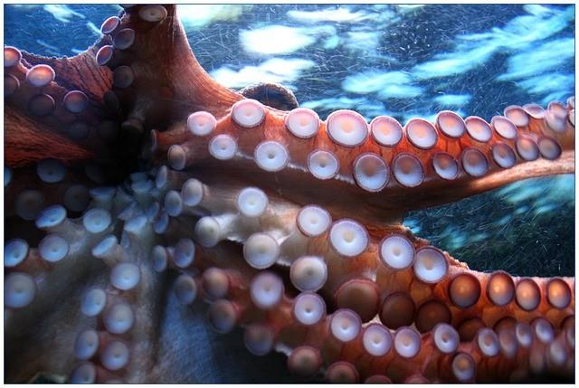 Advarsel: pas på blæksprutter